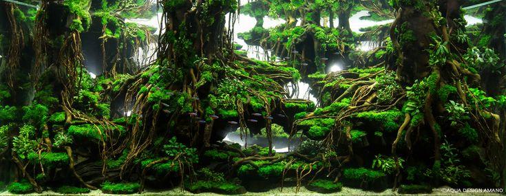 奥行き45センチの世界だなんて信じられない! 「水草レイアウトコンテスト」の作品は思わず息を呑むほど美しい世界観です | Pouch[ポーチ]
