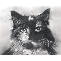 how to draw a realistic cat easy
