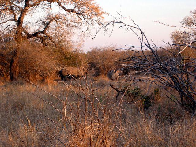 NINIVEMAIL: Fotografie nosorožců přiblížili jsme se k civilisa...