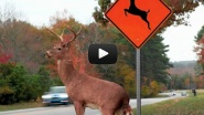 """FARGO, N.D. — Most of us are no strangers to """"deer crossing"""" traffic signs. And apparently this woman from North..."""