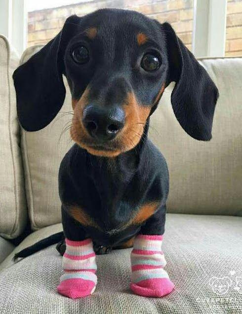 My sweet bilu dog   http://ift.tt/2iEn3OC via /r/dogpictures http://ift.tt/2iEnDQv  #lovabledogsaroundtheworld