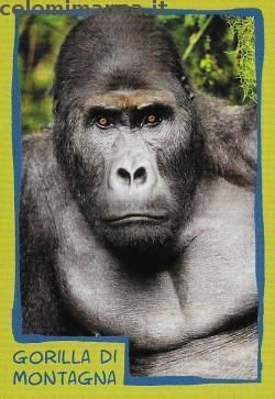 Amici Cucciolotti 2017: Fronte Figurina n. 77 Gorilla di montagna