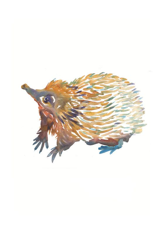 Echidna - Size 8x10 in - Watercolor Painting - Art Print - Nursery Art on Etsy, $18.00