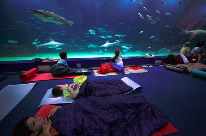 """En la actividad """"Dormir con Tiburones"""", tras una cena y una actividad previa, tienen la oportunidad de dormir rodeados de tiburones en la Torre. Océanos"""