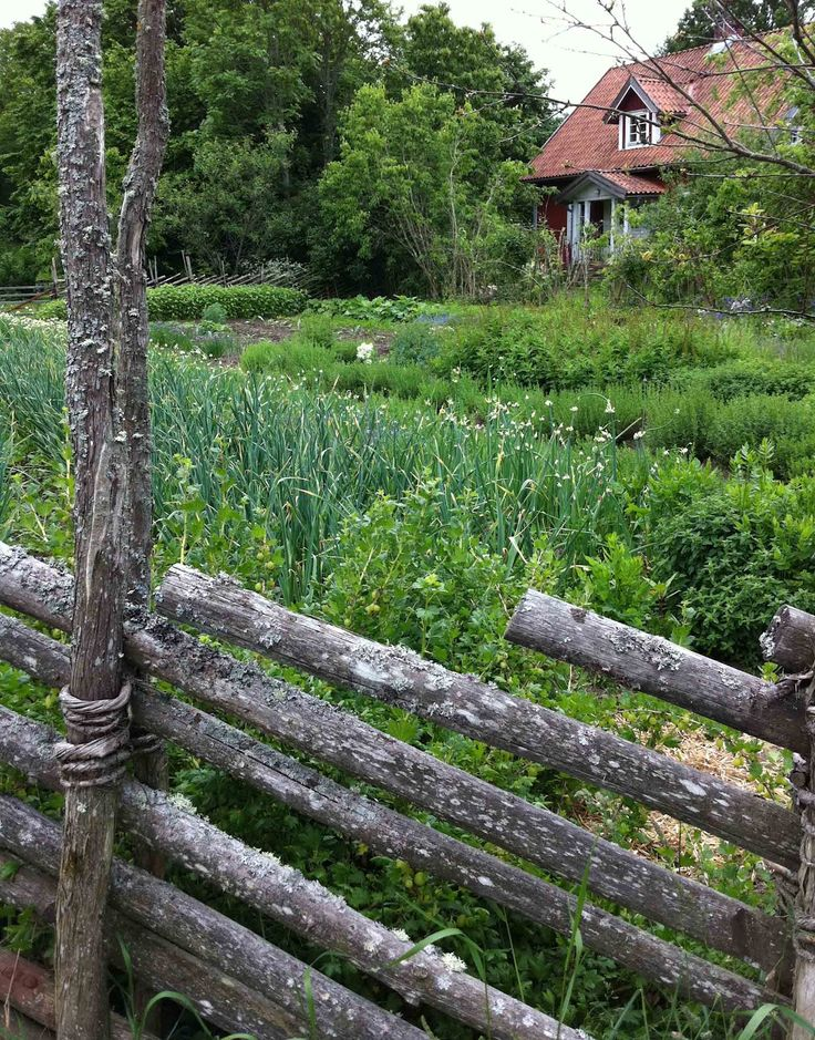Lichen covered willow fencing via Tone on Tone: Swedish Gardens and Landscapes