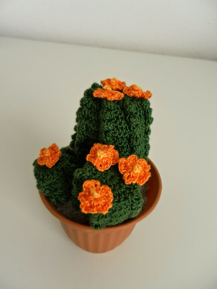 51 best images about piante grasse all 39 uncinetto on - Piante grasse con fiori ...