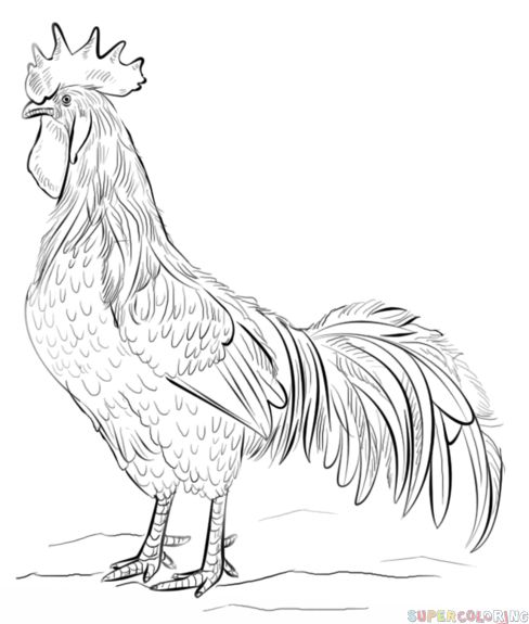 how to draw a rooster step by step drawing tutorials