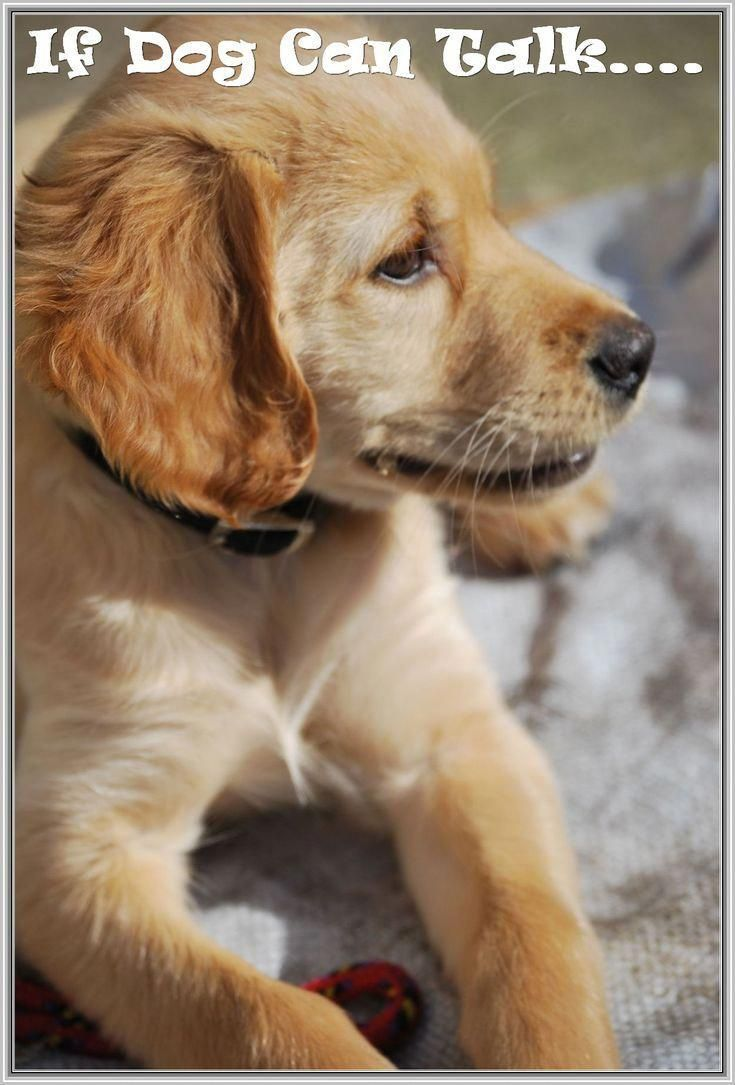 Dog Training 101 How To Train Your Dog Puppies Training Your