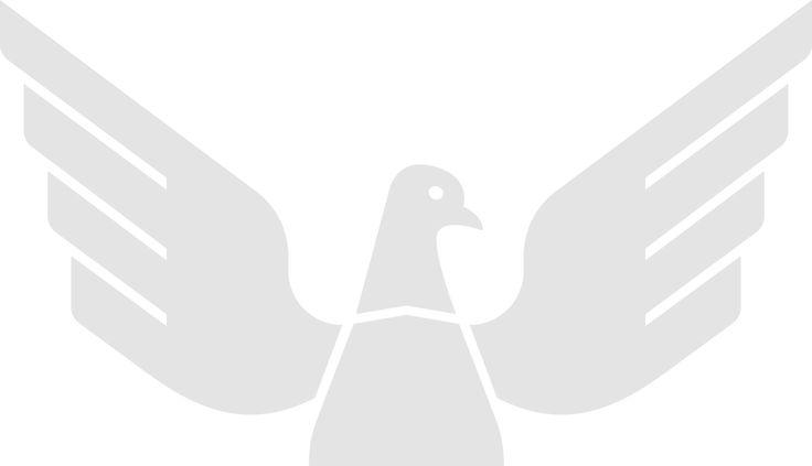 Pigeon Wisdom
