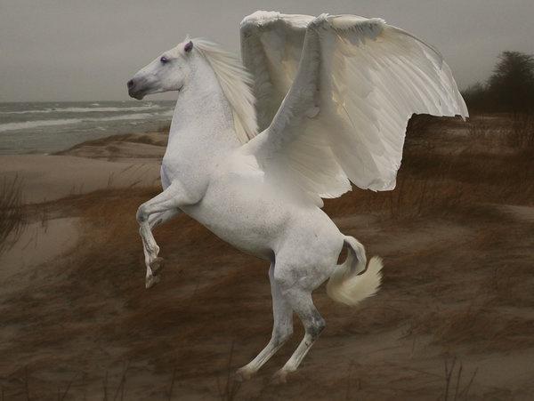 Blackjack Pegasus Porn - Pegasus
