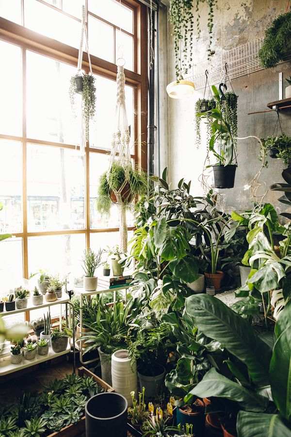 I love the combination of hanging plants and the ones sitting on the windowsill!