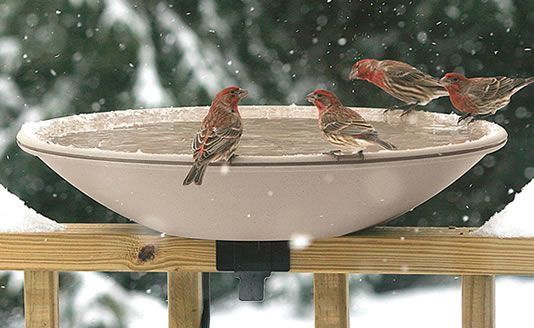 I have this All-Seasons Heated Bird Bath....just put out so the birds get used to it as the neighborhood watering hole. The first year i had it, the birds didn't use it since it was available after winter was well underway....