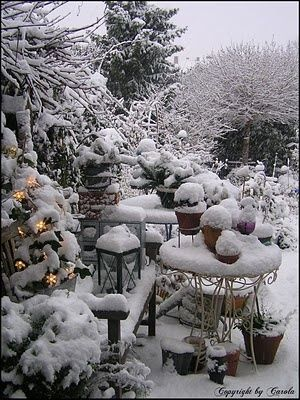 A peaceful and quietly beautiful Christmas garden...frozen in time... and still pleasing in winter.