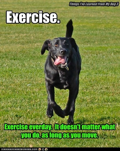 Things I've Learned From My Dog 3