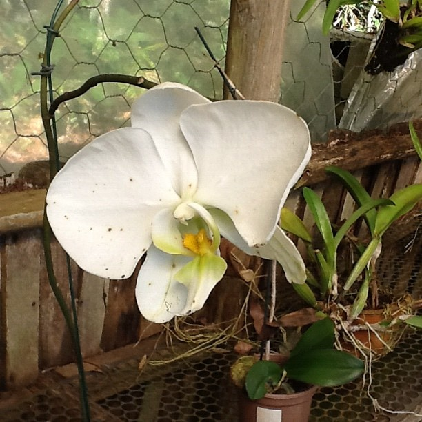 Bela orquidea. - @macfa40- #webstagram