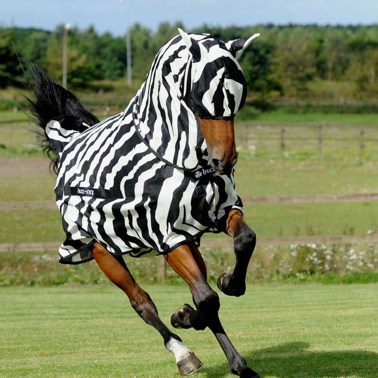 Zebra Pattern Horse Rug: 36 Best FOR THE HORSE Images On Pinterest