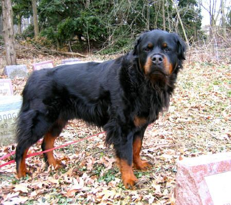 147 Best Images About Extra Ordinary Dog Breeds Or Color