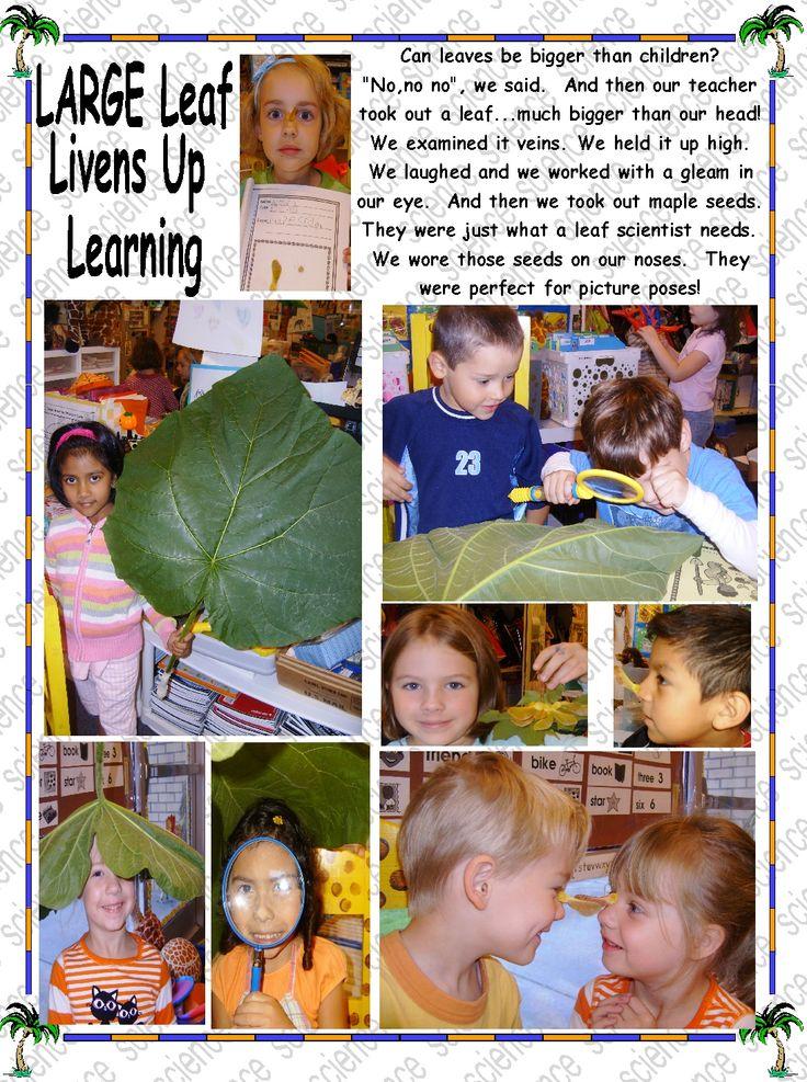 Leaf Science   JUMBO Style