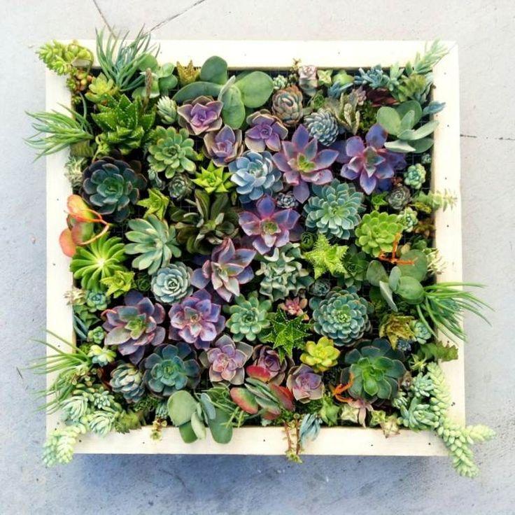 Buntee Sukkulenten bilden diesen vertikalen Garten