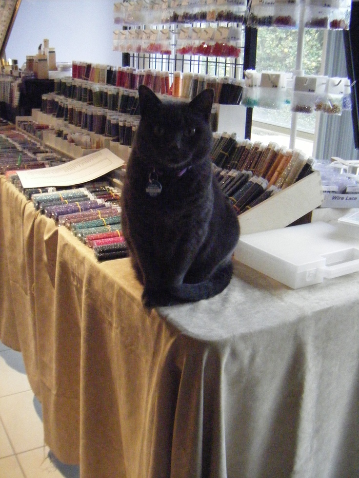 testing out a show layout, mandatory cat inspection