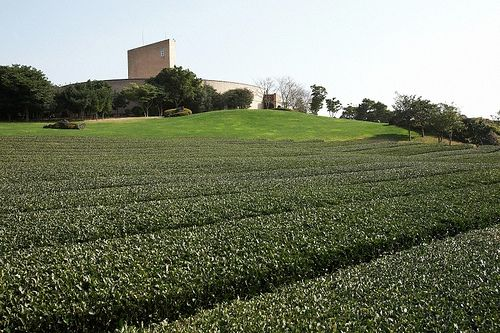 Korea 오설록박물관: In September 2001, #AMOREPACIFIC opened o'sulloc Tea Museum, the largest tea museum in #Korea, in Jeju-do, the historical site where Kim Jeong Hee cultivated tea, to revive and succeed the traditional #tea culture and share it with more people.