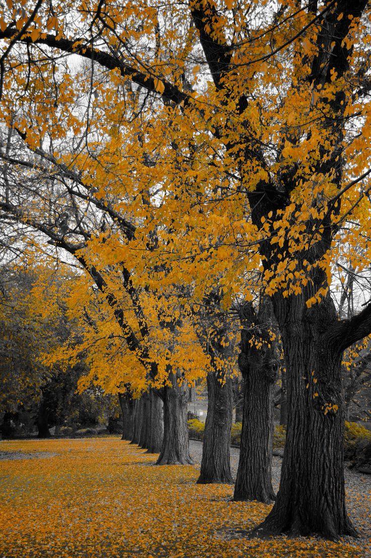 Botanic Gardens Albury Nsw