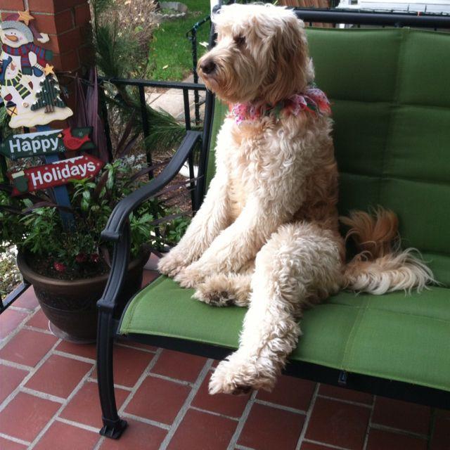 Popular Doodle Chubby Adorable Dog - 8cd6701f01cee52657ecf545cd077661--cute-doodles-doodle-dog  Snapshot_422758  .jpg