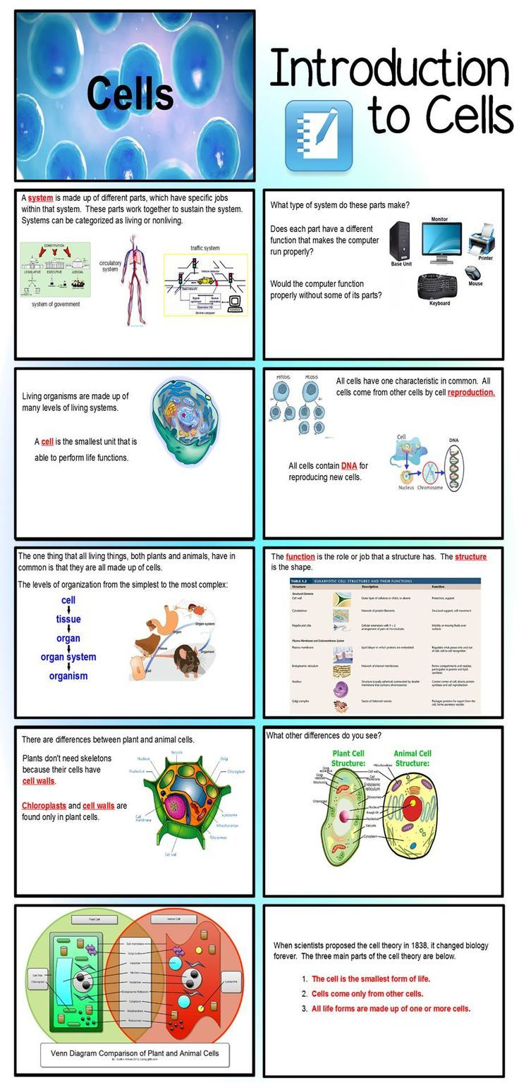 Created With Middle School In Mind This Smart Notebook Presentation Is A Basic Introdu Cells Worksheet Elementary School Science Elementary Science Activities