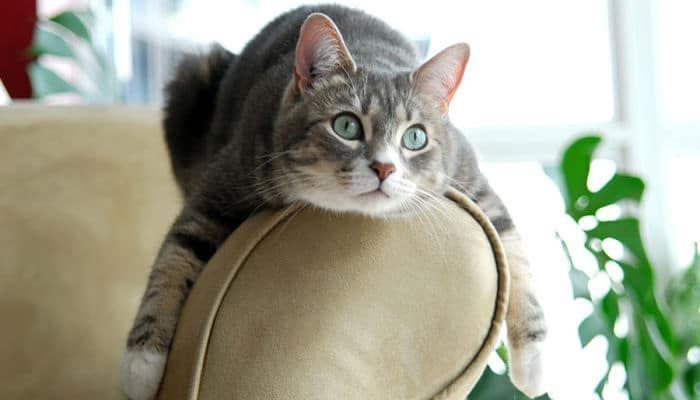 Cómo Evitar Que Los Gatos Arañen El Sofá. Trucos y Tips Infalibles.