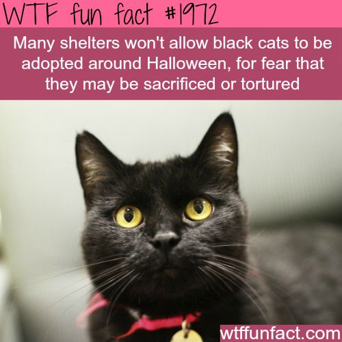 Black cats for halloween - WTF fun facts
