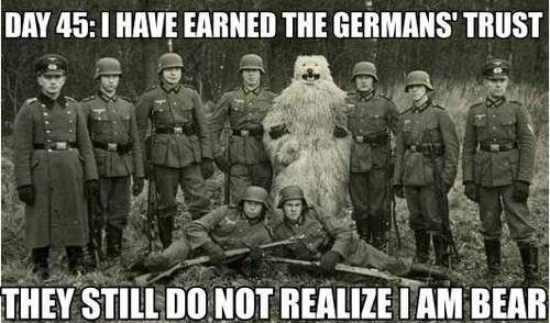 Bear infiltrates Germans