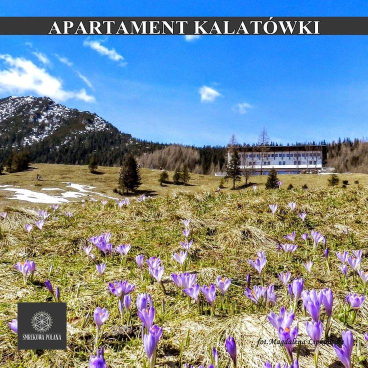 Apartament Kalatówki - zapraszamy! #poland #polska #malopolska #zakopane #mountain #tatry #place #destination