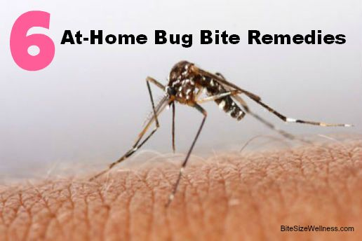 6 All-Natural Bug Bite Remedies - Bite Size Wellness