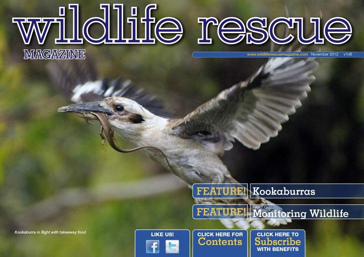 Issue 6A  Kookaburras, motion camera's, nutrition supplements, Pelicans and gannets. http://wildliferescuemagazine.com/issue-six.html