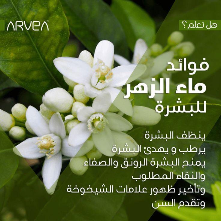 68 Mentions J Aime 1 Commentaires Arvea Nature Arvea Nature Officiel Sur Instagram Saviez Vous فوائد ماء الزهر للبشرة معالجة ال Plants Tunisia Obi