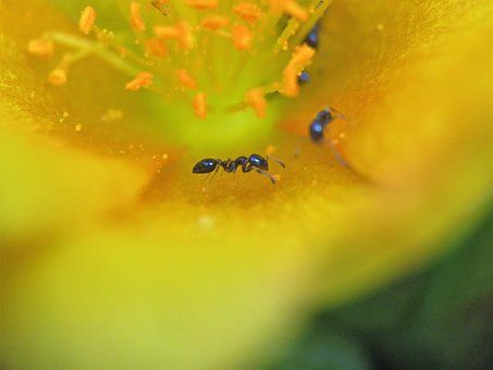 Types of ants with the best picture and facts