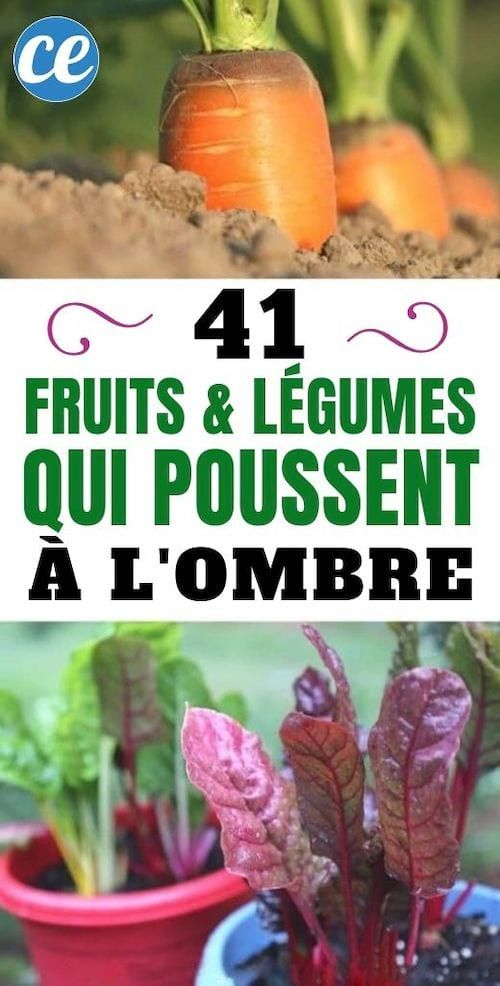 41 Fruits Et Légumes Qui Poussent MÊME à l'Ombre.