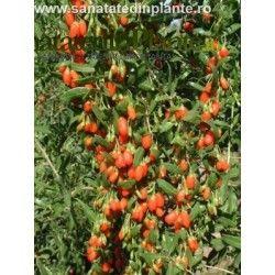 Goji fruits available. Now on http://www.sanatatedinplante.ro/9-goji
