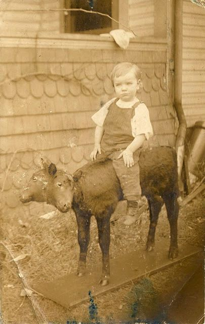 Boy posing on a two headed calf