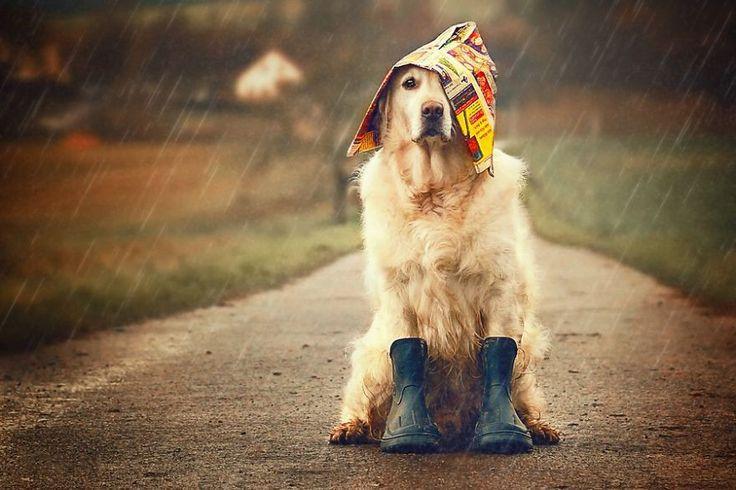 Он ее солнце в дождливые дни