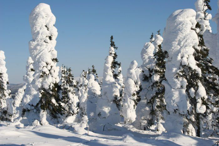 The Coldest Place On Earth Is Located At Prospect Creek In Alaska | Coldest place on earth. Wildlife reserve. Alaska