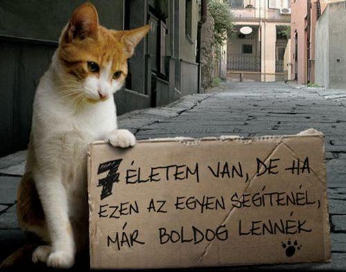 hogy nem csak a kutyákon hanem a macskákon is segítsünk