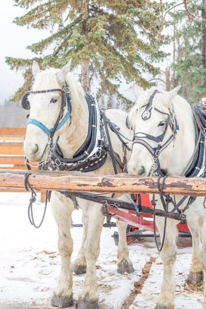 Banff horse drawn sleigh ride - Canmore family trip - Banff family activities