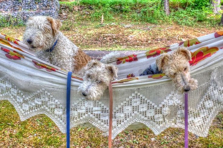 In the hammock | Saturday morning. HDR. | Steve Guttman NYC | Flickr