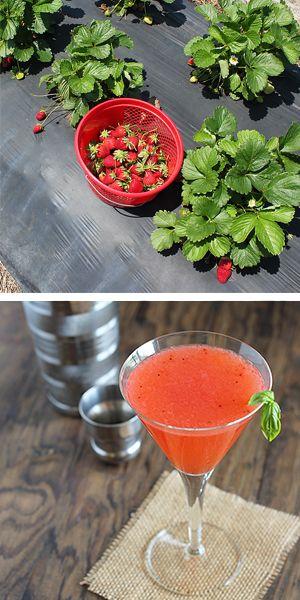 Strawberry Basil Martini Recipe