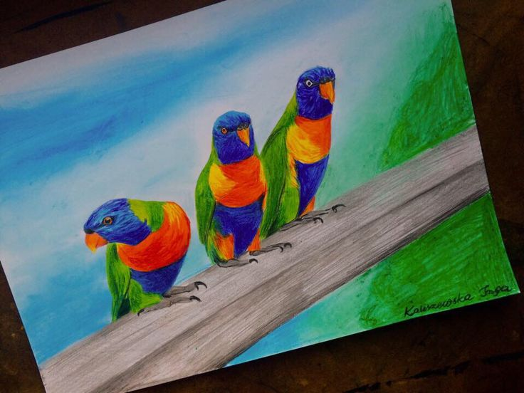 Colored pencils  parrots on a4 paper by Inga Kaliszewska