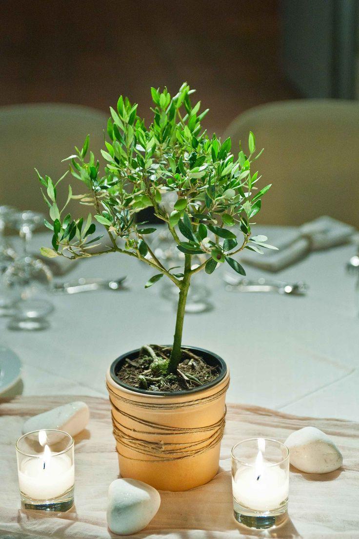 Greek traditional wedding set up.Olive pot centerpiece!