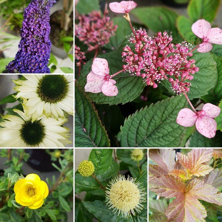 Höst i trädgården är alltid vackert! 🍂🍂🍂🍂🍂#lillahults #trädgård #höst