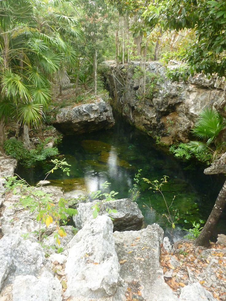 17 best images about cenote jardin de eden ponderosa on for Jardin spanish