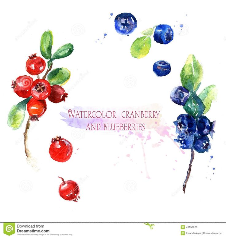 Watercolor Illustration, Cranberry  And Blueberries